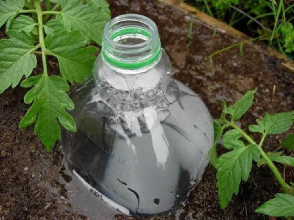 Капельный полив из бутылок фото