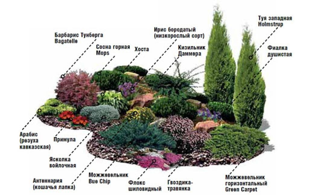 Альпийская горка альпинарий растения